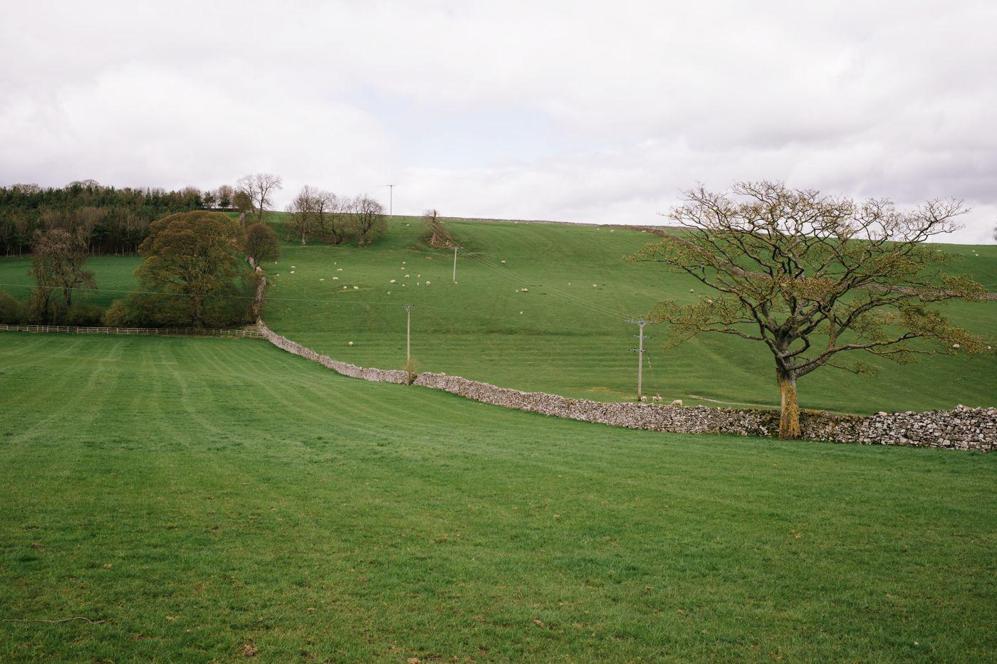 Thorngill
